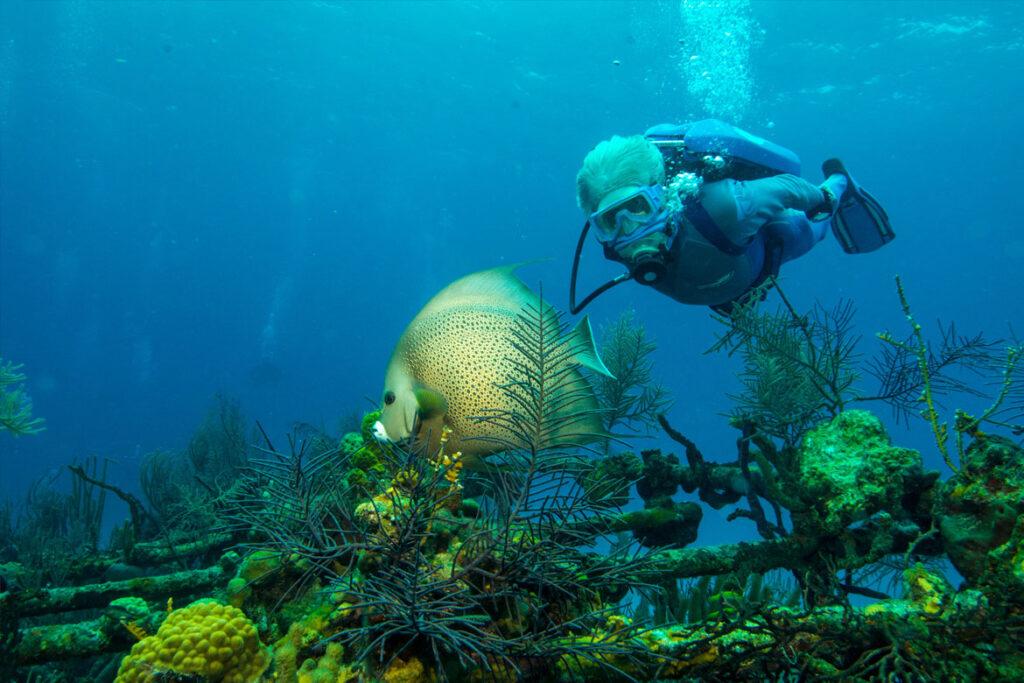"""""""Wonders Of The Sea"""" Szenenbild (© Kinostar)"""